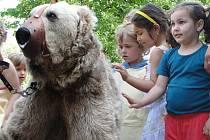 Jedeadvacetiletý medvěd Jerry je filmovou hvězdou. Diváci ho mohou znát například Dva lidi v ZOO.