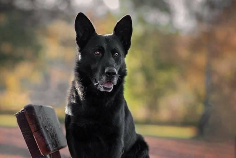 Pes Jalar vypátral zatoulaného muže, ten mu přišel za svoji záchranu osobně poděkovat na služebnu.