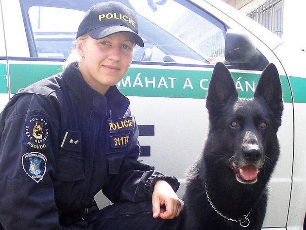 Ovčák Kim patří mezi zkušené policejní psy. Spolu s kladenskou policistkou Jitkou Jozovou tvoří sehraný tým.