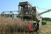 VĚTŠINU zemědělců netrápí množství a kvalita sklizených obilovin, ale jejich nižší výkupní ceny.