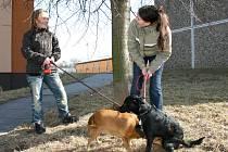 PETRA ŠKRDLANTOVÁ ze Slaného s fenkou Jessi a Monika Svinčiaková s černou fenkou Eny patří k těm chovatelům, kteří zvířata čipovaná mají. Oproti některým majitelům psů to považují za samozřejmost, stejně jako sbírání psích exkrementů po svém svěřenci.
