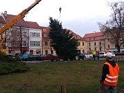 Vánoční strom se tyčí už i na Masarykově náměstí ve Slaném.