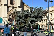 Cesta vánočního stromu z Kladna-Dubí před radnici.