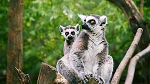 Zvířecí obyvatelé Zooparku Zájezd