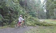 Důsledkem deště a silného větru se rozlomil letitý buk poblíž Bílichova.