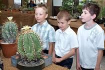 Kladenští kaktusáři se opravdu mají čím pochlubit.