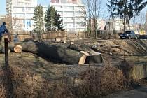 Masivní jasan se poroučel k zemi, prý byl hrozbou v dopravě.