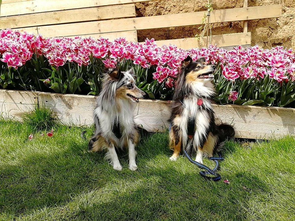 Na květinové farmě ve Stehelčevsi.
