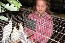 Výstava exotického ptactva přitahuje každoročně stovky dětí.  Školy  budou mít v pátek vstup zdarma.