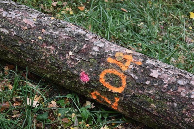 Nemocné stromy v Kladně na Sletišti byly pokáceny, nahradí je nové dřeviny.