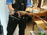 Strážníci se při odchytu ještěra pořádně zapotili.