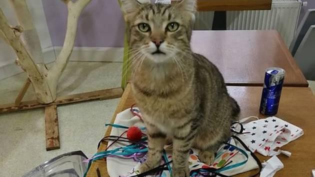 Koronavirus očima koček: Kladenská kočičí kavárna po setmění.
