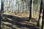 V lesoparku na Hájích začne od pondělí průklest, poškozené stromy musí pryč.