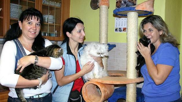 ZLEVA Markéta Slachová, Kristýna Kacálková a Gabriela Vavřincová. V kočičím útulku ve Vrbičanech se má 107 svěřenců chovatelky a jejích spolupracovnic naprosto skvěle. Přesto jsou tamní kočky vhodné i pro zájemce, kteří by o ně měli zájem.