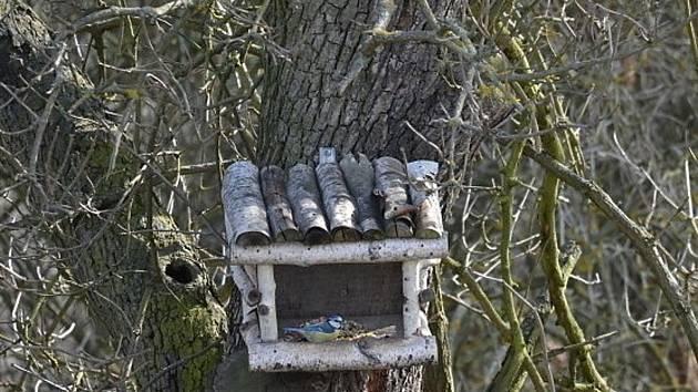 Ptačí krmítka jsou už spíše osiřelá, zato v budkách je živo.