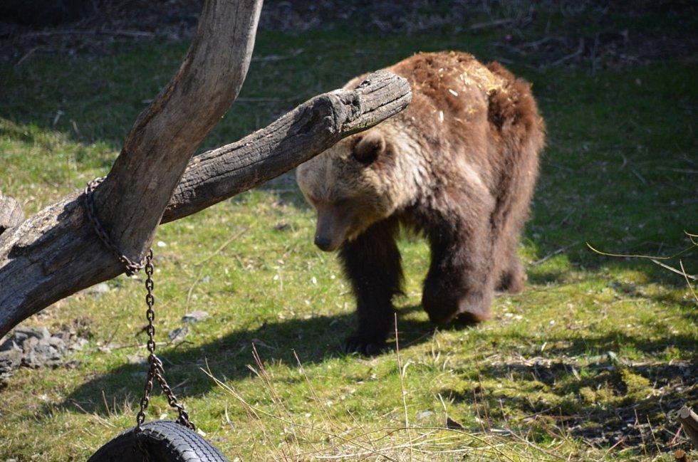 Velikonoce v zahradě Kladenského zámku, k vidění jsou i medvědice.