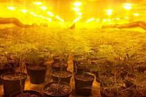 Jedenáct zatčených mužů a zajištěných více než tisíc rostlin marihuany.