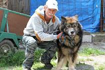 Manžel Dagmar Harigelové (na snímku) pomáhá partnerce nyní se třinácti psími svěřenci.
