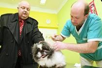 Slánští psi se po úpravě vyhlášky čipování nevyhnou. Výjimku nedostanou bohužel ani přestárlá zvířata.