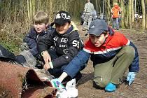 Starší a mladší žáci ze Základní školy v Amálské ulici v Kladně ke Dni Země uklízeli les v lokalitě na Výhybce a vysazovali zde 500 nových borovic.