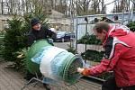 Bratři Slavomír a Dušan Hudákovi prodávají stromky z Únětic ve Slaném už čtvrtým rokem.