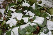 První sníh u slánského Novasu ve čtvrtek dopoledne, cca v 10.10 hodin