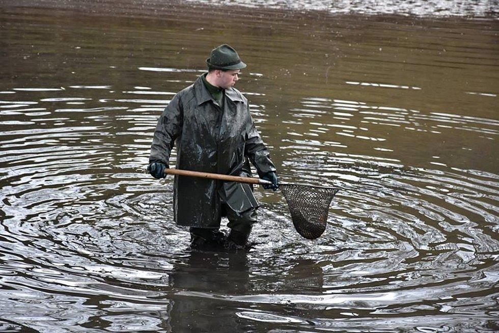 Výlov Na Rybníčkách v Královicích.