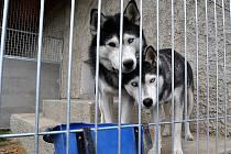Nové kotce vybudované v útulku pro psy v Buštěhradu jsou jak venkovní, tak i vnitřní.