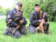 PSOVODKY POLICIE JITKA JOZOVÁ (vlevo) s desetiměsíčním německým ovčákem Harrym a Vera Mravcová s pětiměsíčním belgickým ovčákem Atreyem.