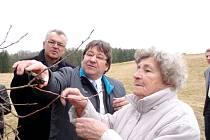 PŘEŽIVŠÍ LIDICKÉ DÍTĚ Marie Šupíková právě odebírá jeden z roubů, které budou šířit genovou informaci staré odrůdy a  připomínat tragickou minulost stromu, z něhož pocházejí.