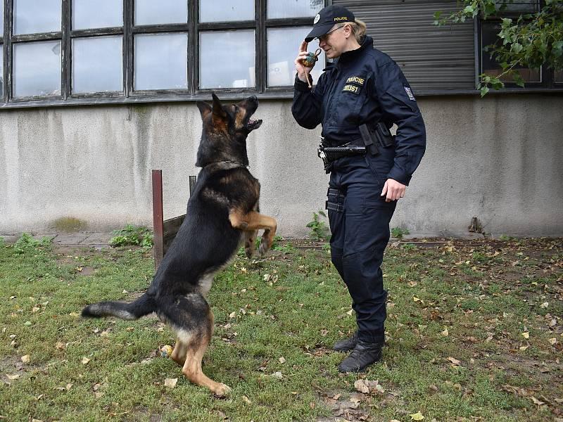 Psovodka Hana Jelínková a pes Hakim při výcviku.