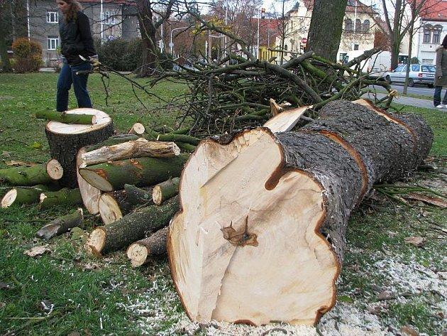 Kácení stromů u kladenského gymnázia