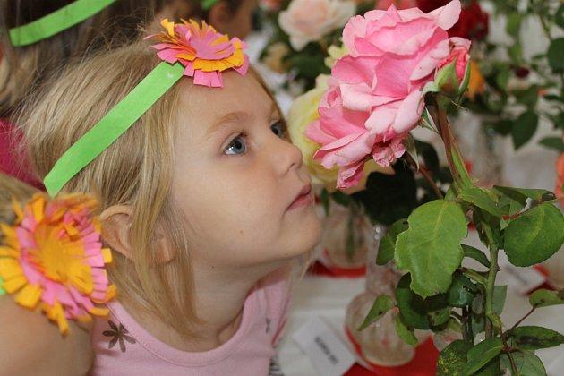 Výstava Růže a květy podzimu. Volba Nejkrásnější růže Kladenska. Dům zahrádkářů Kladno