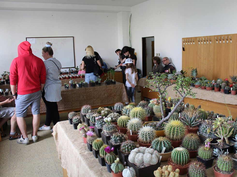 Červnová výstava kaktusů a sukulentů se konala v kladenském Domě techniky.