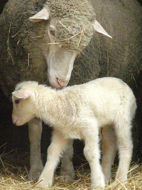 Šťastná maminka se svým potomkem.