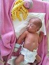 ALENA SOFIE SIROTKOVÁ, KLADNO. Narodila se 21. ledna 2018. Po porodu vážila 2,11 kg a měřila 43 cm. Rodiče jsou Alena Sirotková a Michal Sirotka. (porodnice Kladno)