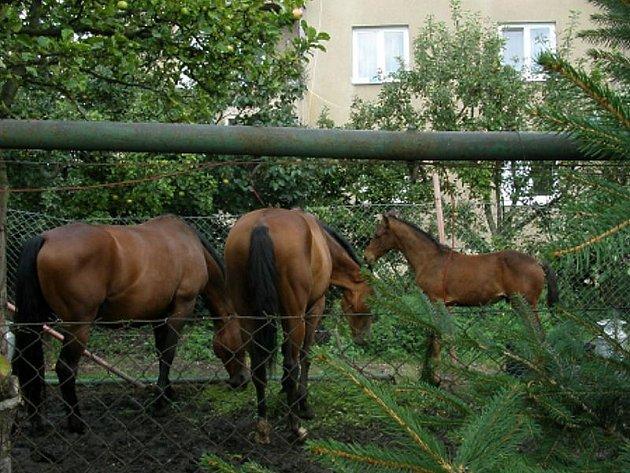 Koňský výběh navazuje přímo na sousední pozemek.