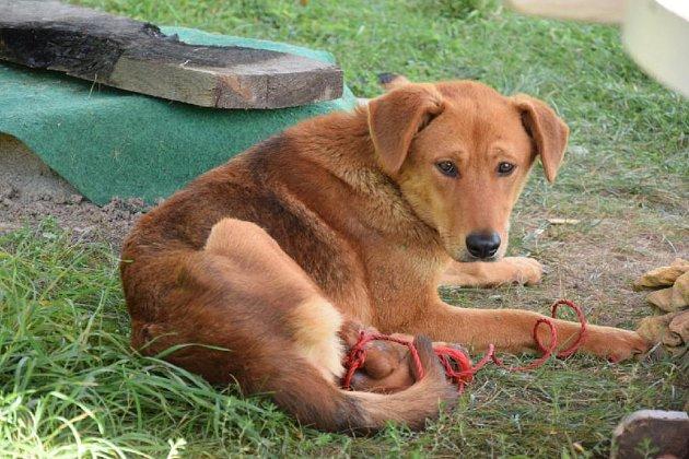 Neznámému majiteli, který svázal psa a přivázal ho patrně ke stromu, hrozí nyní až dva roky za mřížemi.