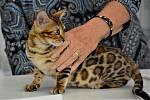 Výstavu koček můžete navštívit v kladenském domě kultury i v neděli.