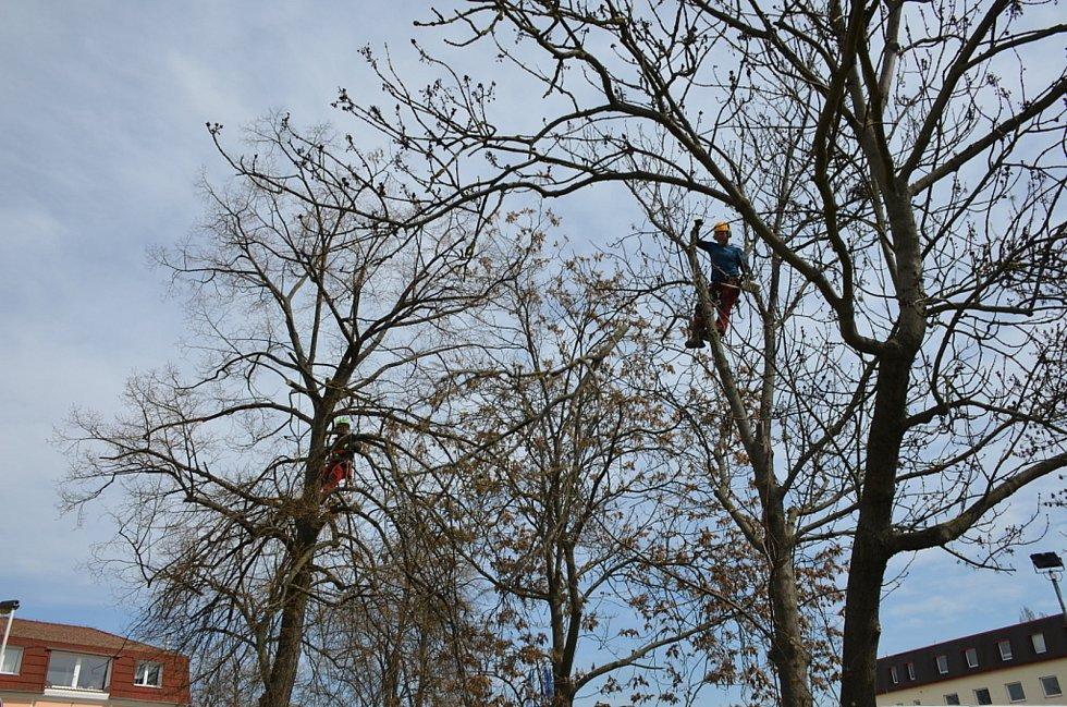Se suchými větvemi si musí často poradit horolezci i v Kladně.