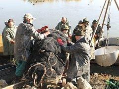 Výlov rybníku v Unhošti - členové tamního rybářského spolku