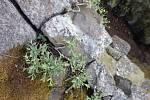 Skoby a lana byly na Slánské hoře už minulý týden