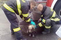 ZACHRÁNĚNÉHO PSA hasiči pořádně osprchovali.