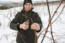 Vinaři mají ze sněhu radost, ale vrásky jim přidělává mráz.