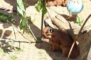 Dvě koťata karakalů znají svá jména, podle sester Williamsových se jmenují Serena a Venus.