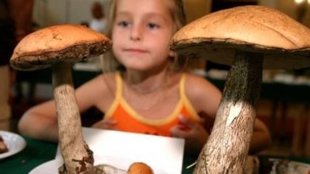 Mykologové radí lidem sbírat pouze houby, které znají, ale zároveň jenom ty, jež vypadají zdravě. Velmi důležité také je, aby se po vytrhnutí ze země nezapařily.