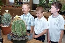 Do povědomí veřejnosti se kladenští kaktusáři každoročně zapisují pořádáním výstav, na nichž prezentují svoje výpěstky.