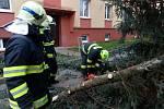 Likvcidace zlomeného smrku ve Slaném v Mírové ulici