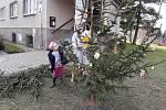 Sázení vánočních stromků v Knovízi.