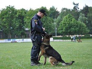 Kladenský služební pes Jalar zachránil život muži z Mělnicka.